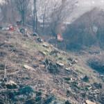 Cerea (VR) - Taglio alberi linea ferroviaria Mantova - Monselice